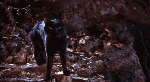 "Why didn't Binx ever contact his parents after becoming a cat? | 19 Questions ""Hocus Pocus"" Left Unanswered"