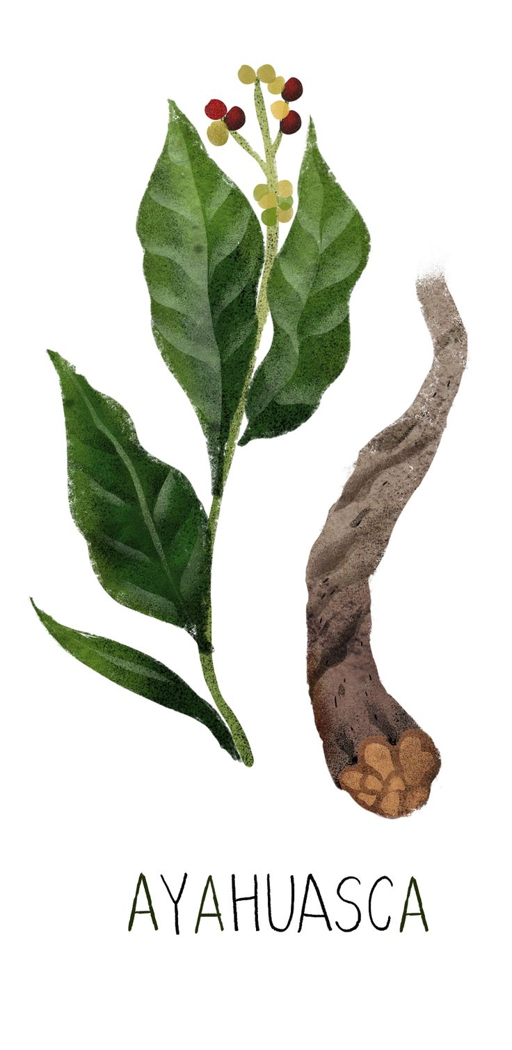 15 best erythroxylum images on pinterest plants medicinal plants deeply rooted in tradition drug practices in these places are nothing short of a learned art izmirmasajfo