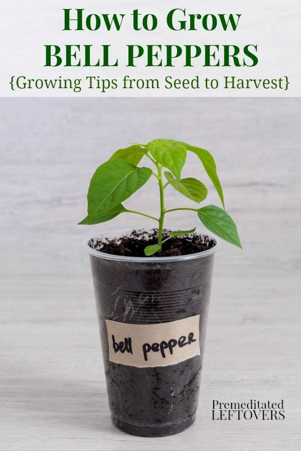 226 Best Budget Gardening Tips Images On Pinterest