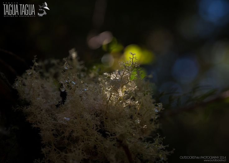 2014 Parque Tagua Tagua | Flickr - Photo Sharing!