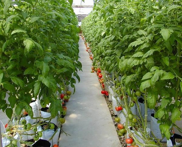 352 best hydroponics images on pinterest aquaponics hydroponics hydroponics a hobby of nature lovers solutioingenieria Images