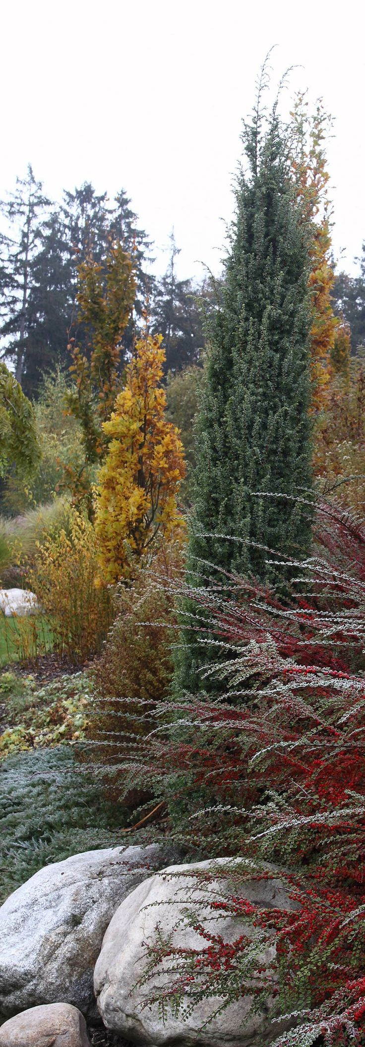 podzim v zahradě / autumn in the garden