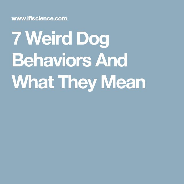 7 Weird Dog Behaviors And What They Mean