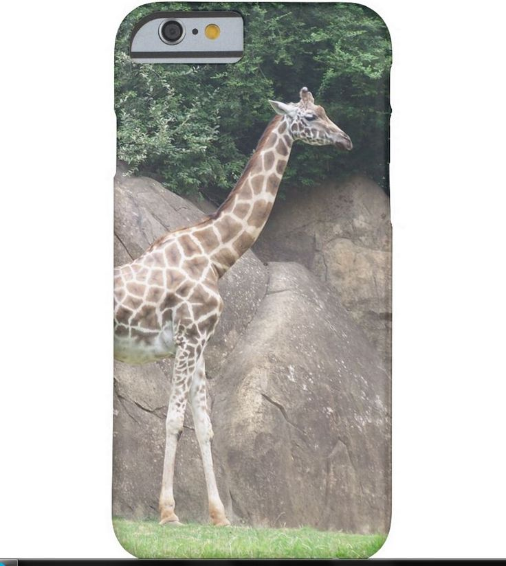 Newest Cell Phone case for Iphones and Samsung Galaxy #iphone6S #samsunggalaxy #galaxy5 #giraffe #mammal #zazzle #zazzlestore  http://www.zazzle.com/collections/cell_phones_and_tablets-119427412044417164