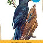 Зимующие птицы — картинки для детей, призванные помочь получить дополнительные знания об окружающем мире. Придумывайте задания самостоятельно и используйте карточки в качестве визуального пособия. Дополнительный материал находится по ссылке.