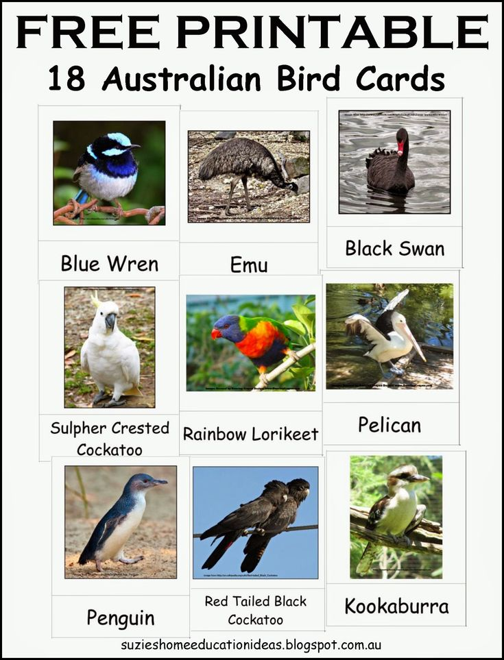 Hands-on learning about Australian Birds