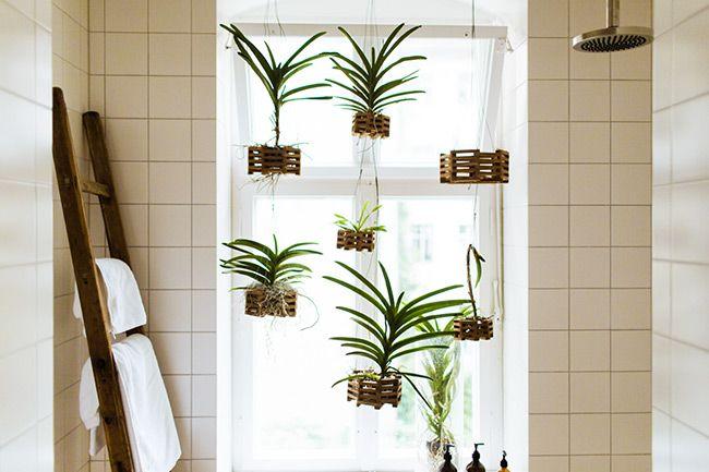 plantes suspendues dans la salle de bain et chelle porte. Black Bedroom Furniture Sets. Home Design Ideas