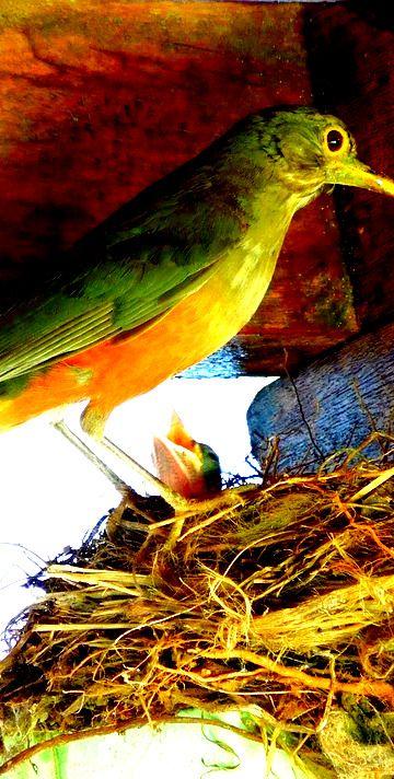 Chico Nogueira: Feitos de ninho