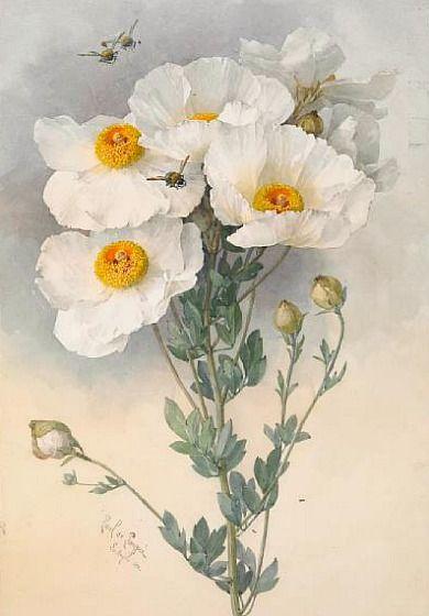 Paul de Longpre Amapolas y abejorros 1899