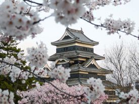 Cherry Blossom Festival - Japan