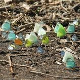 Butterflies meeting in Nicaragua