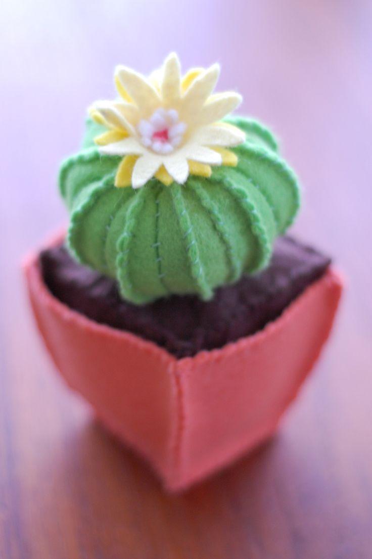 62 best CACTUS galore images on Pinterest | Cactaceas, Suculentas y ...