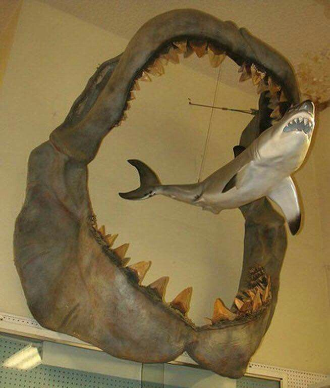 A comparison showing the size of an ancient Megalodon compared to a modern day Great White shark.