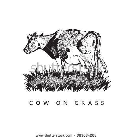 Cow On Grass. Graphic Vector Illustration. Black and white image.