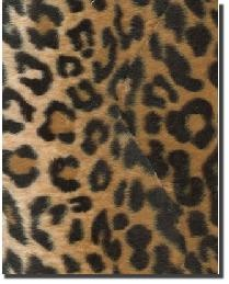 LEOPARD!!!!!!!!!!!!!!!!!!!!!!!!!!!!!!!!!!!! My all time favorite animal print:)