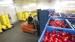 Nederlandse tomatentelers foppen Russen met sluiproutes