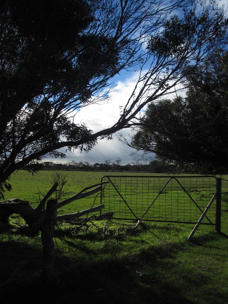 'Roo's Rest', near Antechamber Bay, Kangaroo Island
