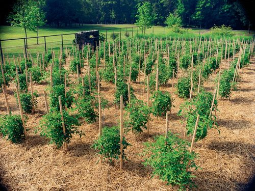 Self-Reliance Gardening website. Lots of plans and info.