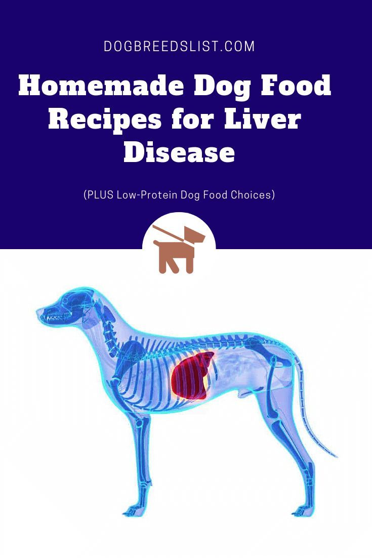 Best low protein dog food for liver disease