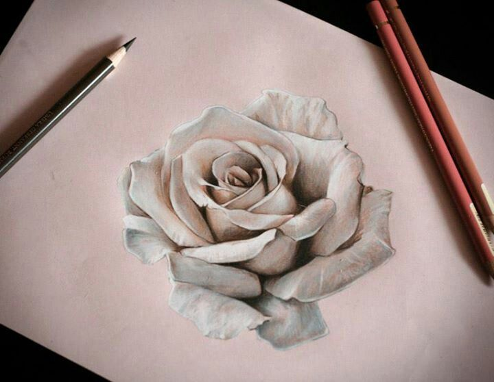Awesome Drawing of a 3-D Rose! GORGEOUS!