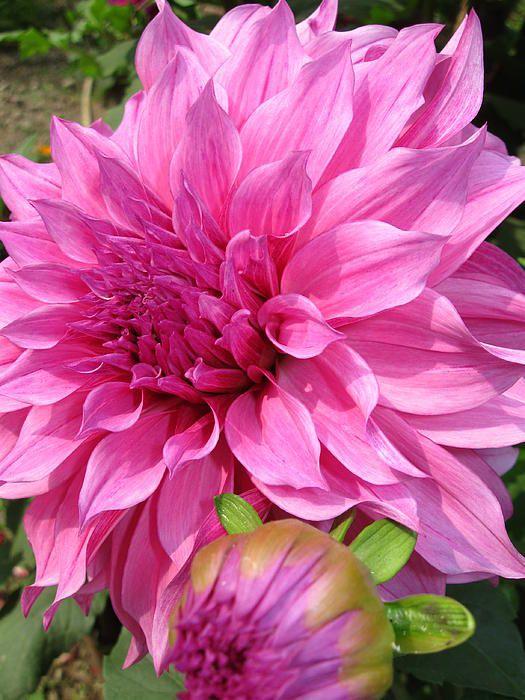 2419 Best Flower Garden Ideas Images On Pinterest Flower