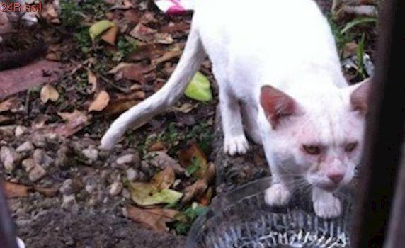 Gatos abandonados em terreno baldio precisam de resgate em SP