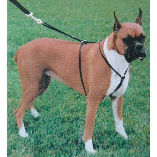 Coastal Pet Products DCP603326LG Nylon Walk Right Control Dog Harness, Large, Black >>> More info could be found at the image url.