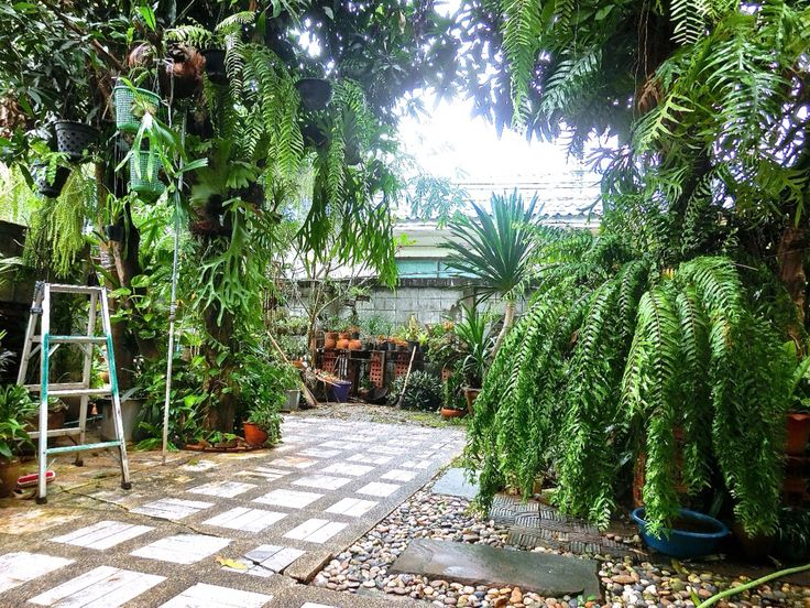 My backyard garden. 05-12-2014.