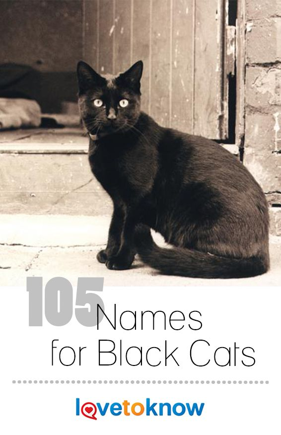 189 Creative Names For Black Cats Names For Black Cats Black