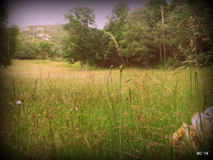 paisagem a longa distância