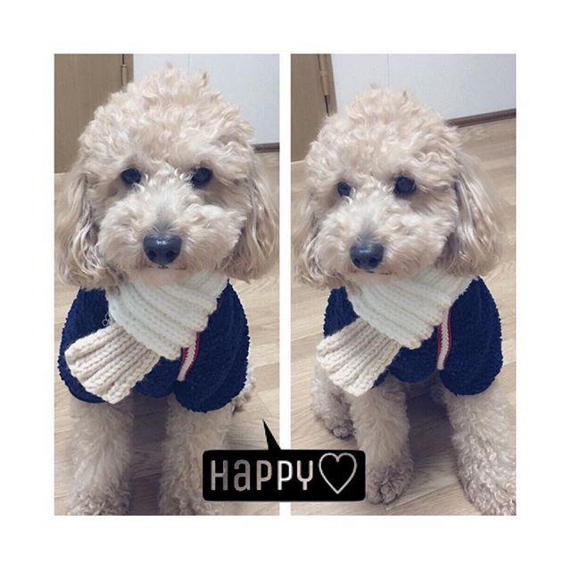 ・ ・ ・ 『僕、とっても似合うでしょ🐶』 お友達から、ノアにマフラーのプレゼント🎁いただきました❤️ 手作りでとっても可愛い〜 (*ฅ́˘ฅ̀*) これでお散歩も寒くないねっ(๑′ᴗ‵๑) ありがとう💞💞・ ・ ・ ・ #トイプー#デカプー#マフラー#プレゼント#可愛い#暖かい#手作り#ありがとう#ワン友達#フワモコ部#犬生活#愛犬#❤️ #muffler#present#cute#handmade#thanks#happy#dog#toypoodlelove#doglife#instadog#insta