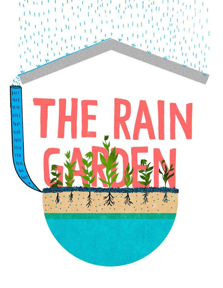 Illustration by Luke Cloran, Type by Brandt Imhoff   A Rain Garden is a constructed shallow depression where stormwater is allowed to collect and soak into the ground. The area contains a select mixture of soils containing compost, sand, and gravel mixed with topsoil in order to soak up a significant volume of runoff. The garden is lushly planted with native species to allow the long roots of the plants to take up water (evapotranspiration).