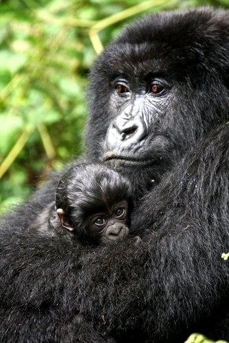Endangered Animals - Endangered Animals - explore