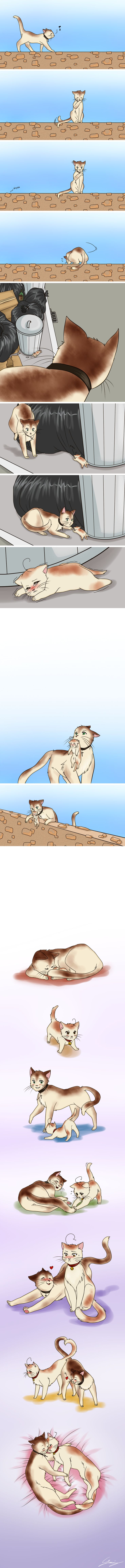 Spain and Romano cats.