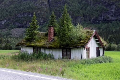 trees blending with a shackGreen Roofs, Old House, Greenroof, Mothers Nature, Trees House, Christmas Trees, Roof Gardens, Rooftops, Norway
