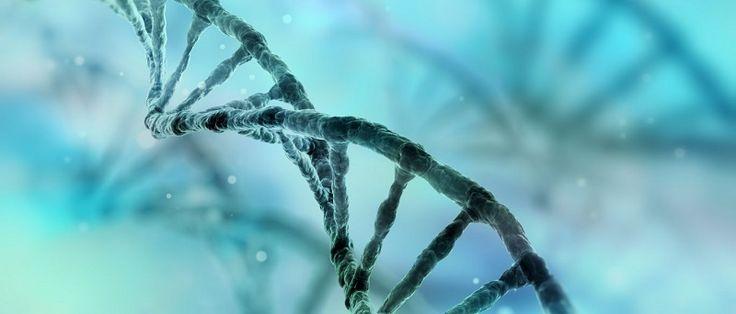 Usando tecnologias de ponta, o Instituto Europeu de Oncologia (IEO) desenvolveu um teste revolucionário capaz de mapear o risco genético hereditário de se ter um tumor analisando, em um único chip, as 115 mutações genéticas conhecidas. O anúncio foi feito pelo diretor científico da entidade...