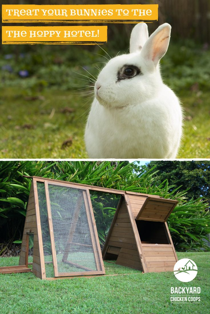 21 best rabbit hutches images on pinterest rabbit hutches