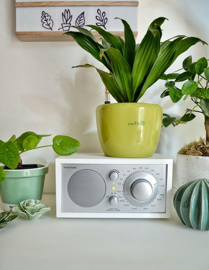 L'importanza del verde in casa...la mia PianTina!!