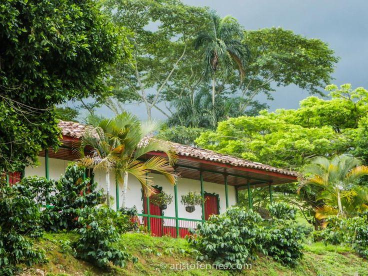 Eje cafetero en Colombia: un viaje con aroma de café