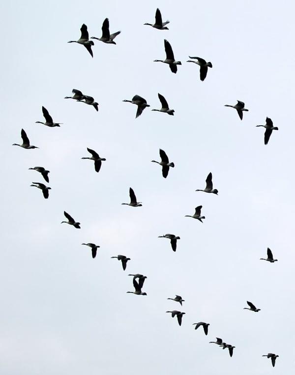 Flight- by Tony Karp  timuseum.com