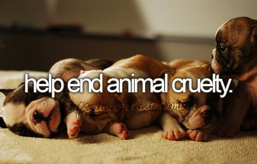 help end animal cruelty, because they dont deserve it.