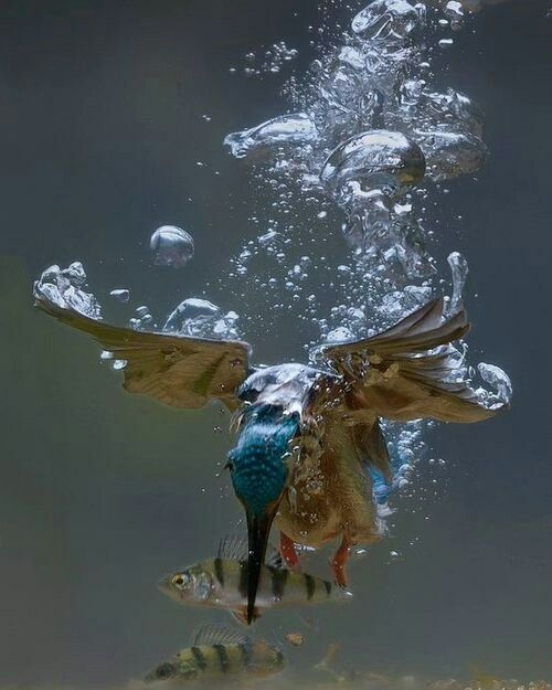 This is stunning. I've never seen a kingfisher (I'm assuming that's what this is) captured quite like this.