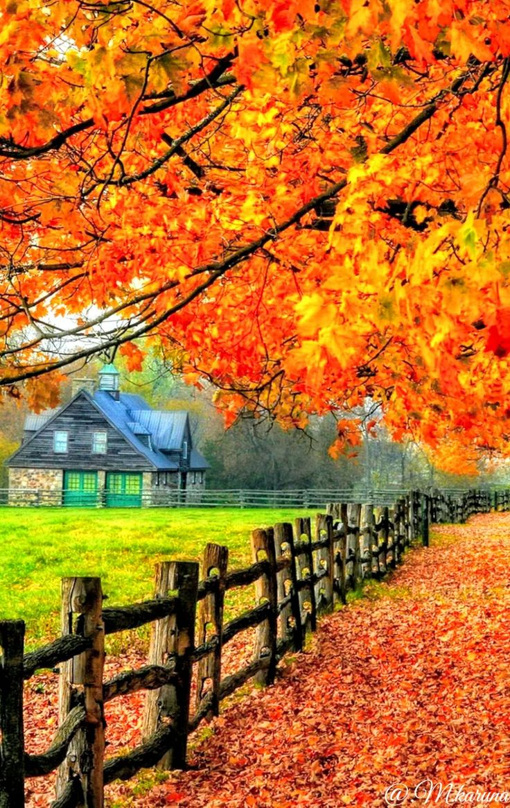 Best 25+ Fall Scenery Pictures Ideas On Pinterest