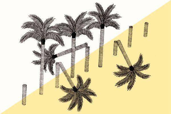 palmiers-amélie fontaine POUR FAIRE PLAISIR À MUK: Draw Me, Illustrations Ideas, Palmierscalendriermjpg 448298