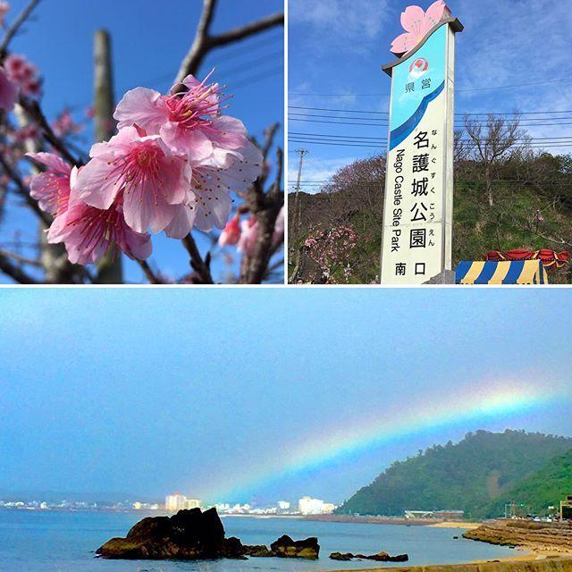 【urumano.takumi.seikotuinn】さんのInstagramをピンしています。 《桜を見てきました。道中で虹も見れました(^_^) #沖縄#桜#来週には満開かな?#虹 #幸せのおすそわけ #矯正#小学生から#80歳代まで#喜びの声多数#リフトアップ#バストアップ#ヒップアップ#肩こり#腰痛#スポーツパフォーマンスの向上#産後ケア#可動式制限#猫背#鍼治療#光線治療#コウケントー#全身コースあり#動くベット#こだわり#筋肉の治療#もう諦めていたその痛みその辛さ#そろそろアプローチを変えてみませんか?#うるまの匠整骨院》