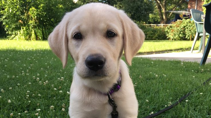 six golden rules from puppy school that work equally well on kids.