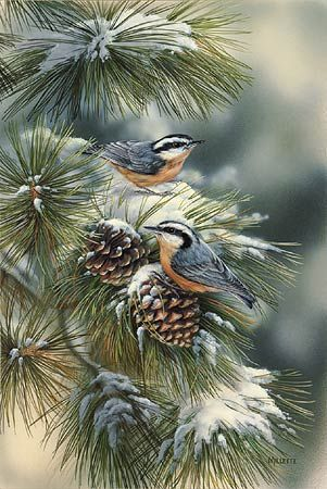 """""""Winter Gems-Nuthatch"""" by Rosemary Millette"""