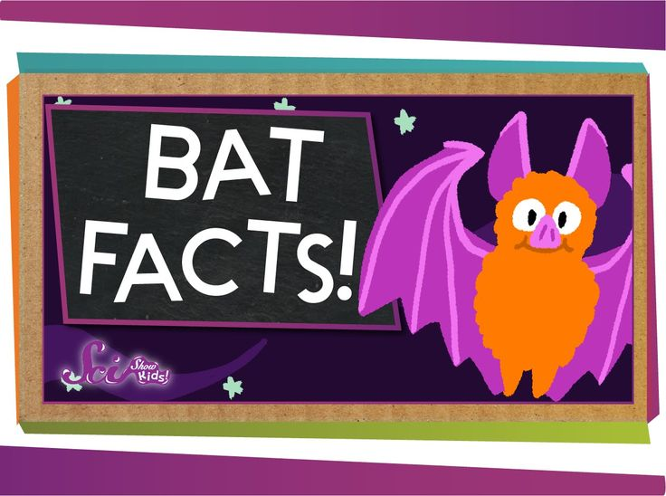 You don't have to be Batman to think bats are awesome! Learn some fun facts about these furry flying mammals.