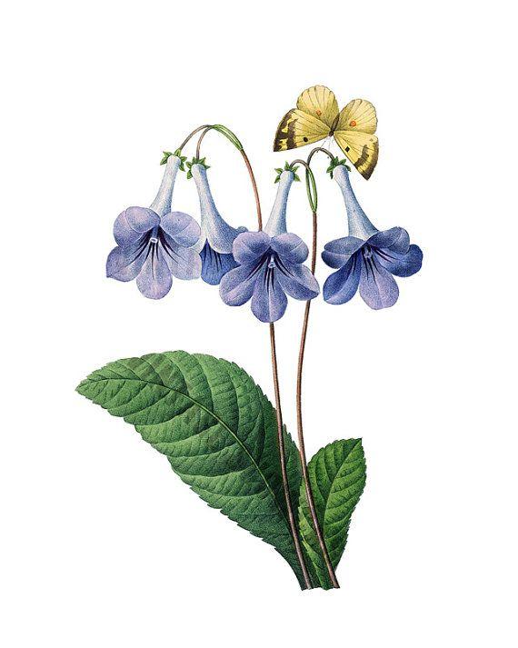 BLUE BELLS fiore farfalla Instant Download Grande immagine digitale in colore - ferro su - vintage fiori REDOUTE No.2512