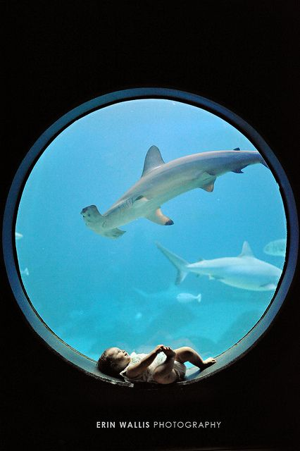17 best images about baby photo inspiration on pinterest for Baby sharks for fish tanks